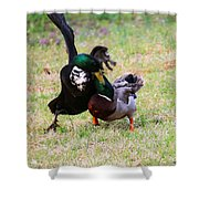 Duck Tussle II Shower Curtain