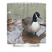 Duck Wading In A Stream Shower Curtain