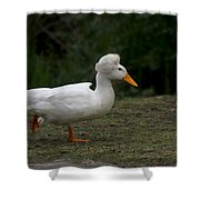 Duck With Stylish Hair Shower Curtain