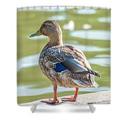 Duckling By The Lake  Shower Curtain