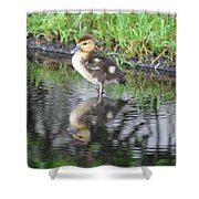 Duckling With Reflection Shower Curtain