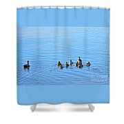 Ducklings Day Out Shower Curtain by Kaye Menner