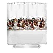 Duckorama Shower Curtain