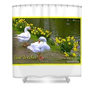 Ducks And Daffodils Greeting Shower Curtain