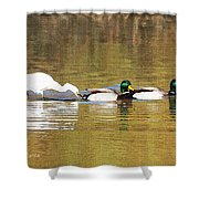 Ducks And Egret Shower Curtain