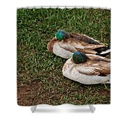 Ducks At Rest Shower Curtain