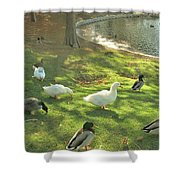 Ducks At The Park Shower Curtain
