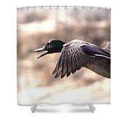 Ducks Have Teeth - Mallard Shower Curtain
