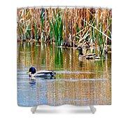Ducks In A Marsh Shower Curtain