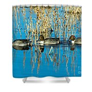 Ducks In A Row Shower Curtain