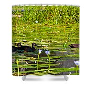 Ducks In Lily Pond Shower Curtain
