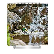 Ducks In The Falls Shower Curtain