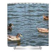 Ducks On Spaulding Pond Shower Curtain