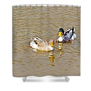 Ducks Pair Looking To Camera Shower Curtain