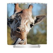 Duh Shower Curtain
