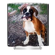 Dumb Bee Eater Boxer I Shower Curtain