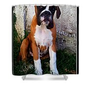 Dumb Bee Eater Boxer II Shower Curtain