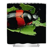 Dung Beetle Panama Shower Curtain
