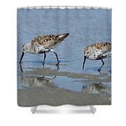 Dunlins Shower Curtain