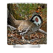 Dusky Grouse Cock Shower Curtain