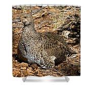 Dusky Grouse With Chicks Shower Curtain