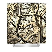 Snow Dusted Limbs Shower Curtain