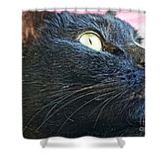 Dusty Black Cat Shower Curtain