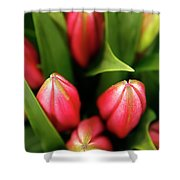 Dutch Bulbs Shower Curtain