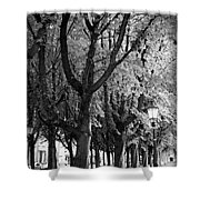 Dutch City Trees - Black And White Shower Curtain