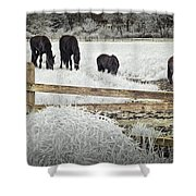 Dutch Friesian Horses Behind A Wooden Fence In A Pasture Shower Curtain