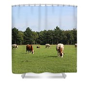 Dutch Landscape With Cows Shower Curtain