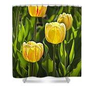Dutch Yellow Tulip Flowers On Windmill Island In Holland Michigan Shower Curtain