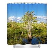 Dwarf Cypress Trees In A Field Shower Curtain