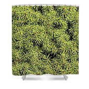 Dwarf Evergreen Shower Curtain