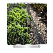 Dwarf Green Curled Shower Curtain