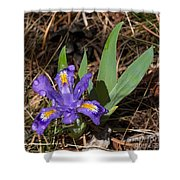 Dwarf Lake Iris Shower Curtain