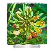 Dwarf Lousewort On Miles Canyon Trail To Canyon City Near Whitehorse-yk Shower Curtain