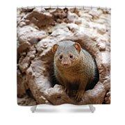 Dwarf Mongoose  Shower Curtain