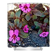 Dwarf Purple Monkeyflower In Lava Beds Nmon-ca Shower Curtain