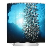 Dwarf Sweepers In Cave Entrance Shower Curtain