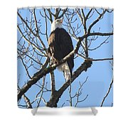 Bald Eagle Sunny Perch Shower Curtain