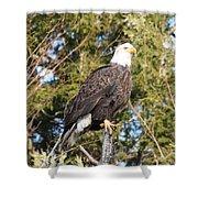 Eagle 1979 Shower Curtain