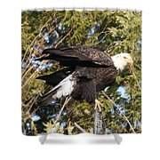Eagle 1982 Shower Curtain