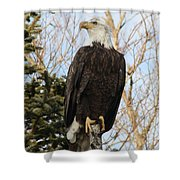 Eagle 1991a Shower Curtain