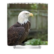 Eagle 2 Shower Curtain