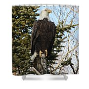 Eagle 3 Shower Curtain