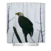 Eagle 3940 Shower Curtain