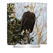 Eagle 5 Shower Curtain