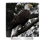 Eagle 9786 Shower Curtain