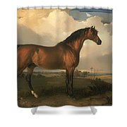 Eagle - A Celebrated Stallion Shower Curtain